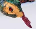 Python (close up)
